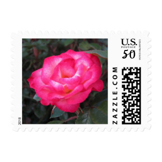 Pink and white rose postage
