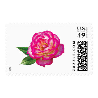 Pink and White Rose Stamps