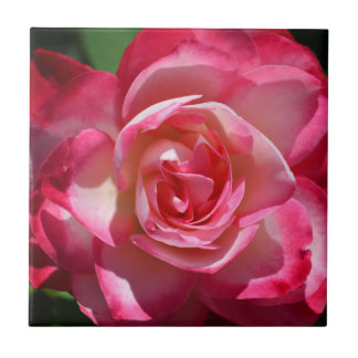 Pink and White Rose Tile