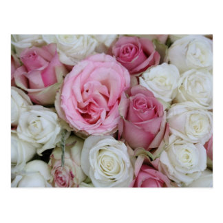 pink and white roses by Therosegarden Postcard