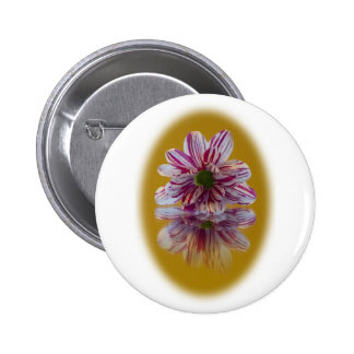Pink and White Striped Daisy Gerbera Pinback Button