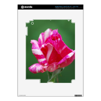 Pink and white striped rose decals for iPad 3