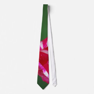Pink and white striped rose tie