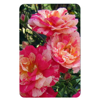 Pink and White Striped Roses Magnet