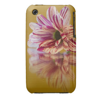 Pink and White Stripey Gerbera Flower iPhone 3 Case-Mate Cases