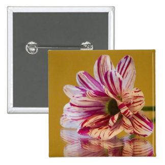 Pink and White Stripey Gerbera Flower Pinback Button