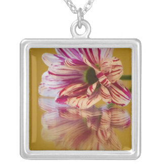 Pink and White Stripey Gerbera Flower Silver Plated Necklace