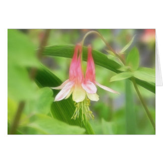 Pink And Yellow Columbine Card