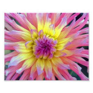 Pink and Yellow Dahlia 10x8 Photo Print