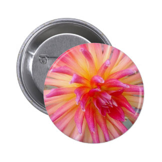 Pink and Yellow Dahlia Button