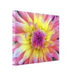 Pink and Yellow Dahlia Gallery Wrapped Canvas