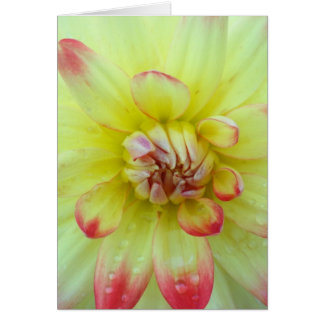 Pink and Yellow Dahlia's Card