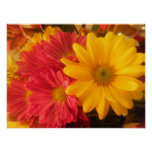 Pink and Yellow Daisies Poster
