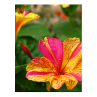 pink and yellow flower post card