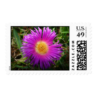 Pink and yellow flower Postage