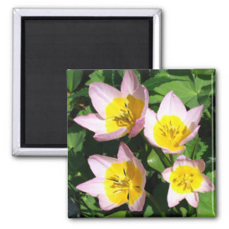 Pink and yellow lilies 2 inch square magnet