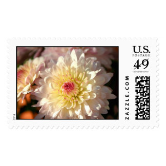 Pink and Yellow Mums Postage Stamps