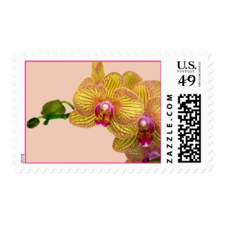 Pink and Yellow Orchid Postage Stamps
