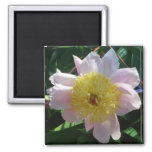 Pink and Yellow Peonies Beautiful Floral Garden Magnet
