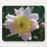 Pink and Yellow Peonies Beautiful Floral Garden Mouse Pad