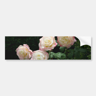 Pink and yellow rose blooms bumper sticker