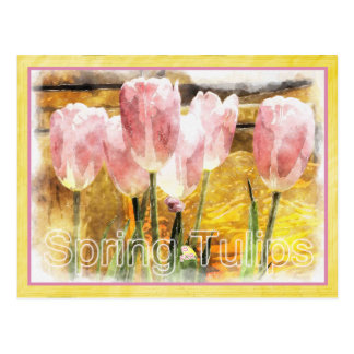 Pink and Yellow - Spring is for Tulips Postcard