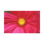 pink and yellow stretched canvas prints