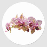 Pink and Yellow Striped Orchid Round Sticker