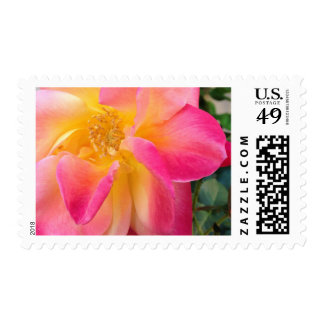 Pink and Yellow Tropical Flower Postage Stamps