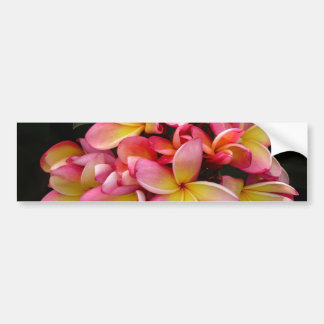 Pink and Yellow Tropical Plumeria Flowers Bumper Sticker