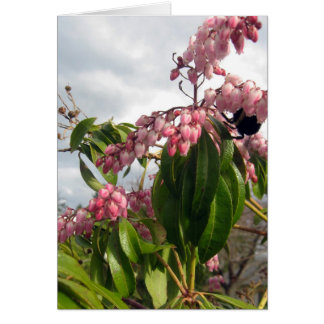 Pink Andromeda with Buzzing Bee, photograph Cards