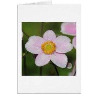 Pink Anemone Card