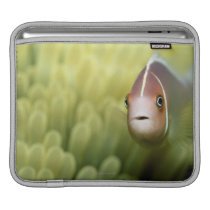 Pink Anemone Fish Sleeve For iPads