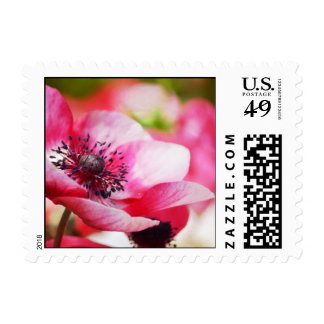 Pink Anemone Stamp
