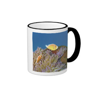 Pink Anemonefish ( Amphiprion perideraion ) in Ringer Mug