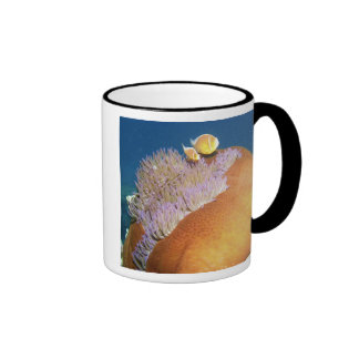 Pink Anemonefish Amphiprion perideraion ) in Ringer Mug