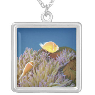Pink Anemonefish ( Amphiprion perideraion ) in Silver Plated Necklace