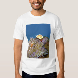 Pink Anemonefish ( Amphiprion perideraion ) in T Shirt