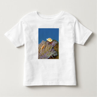 Pink Anemonefish ( Amphiprion perideraion ) in Tee Shirt