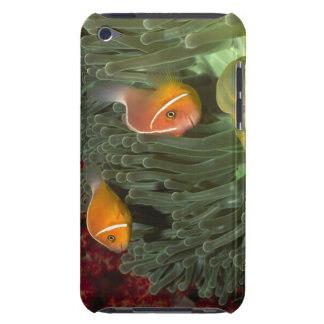Pink Anemonefish in Magnificant Sea Anemone iPod Touch Cases