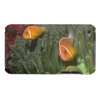Pink Anemonefish in Magnificant Sea Anemone iPod Touch Case-Mate Case
