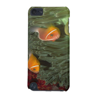 Pink Anemonefish in Magnificant Sea Anemone iPod Touch (5th Generation) Covers