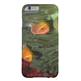 Pink Anemonefish in Magnificant Sea Anemone Barely There iPhone 6 Case