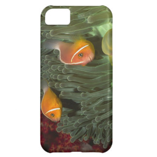 Pink Anemonefish in Magnificant Sea Anemone Case For iPhone 5C