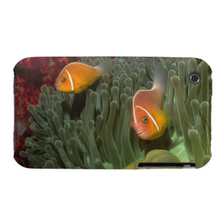 Pink Anemonefish in Magnificant Sea Anemone Case-Mate iPhone 3 Case