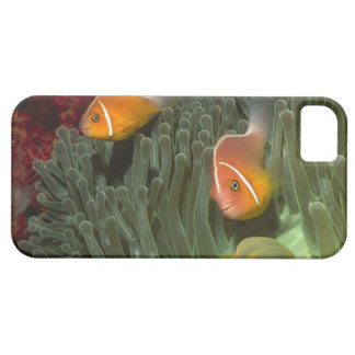 Pink Anemonefish in Magnificant Sea Anemone iPhone SE/5/5s Case