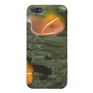 Pink Anemonefish in Magnificant Sea Anemone iPhone SE/5/5s Cover