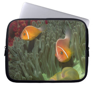 Pink Anemonefish in Magnificant Sea Anemone Laptop Sleeve