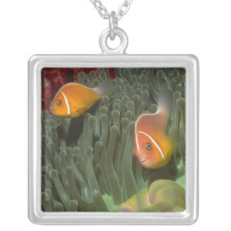 Pink Anemonefish in Magnificant Sea Anemone Square Pendant Necklace