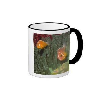 Pink Anemonefish in Magnificant Sea Anemone Ringer Mug